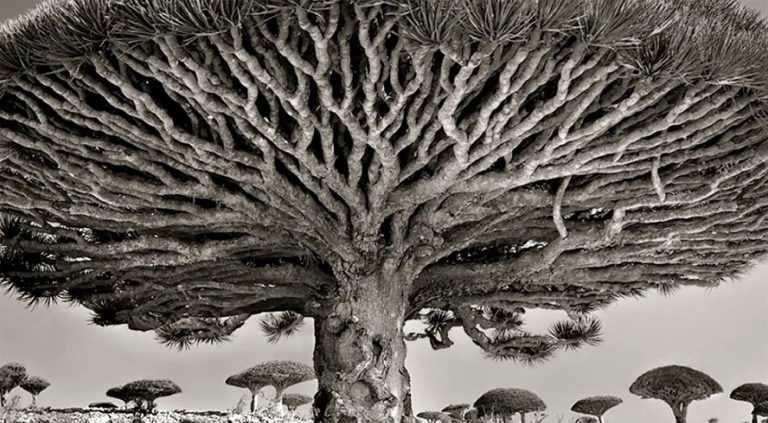 Beth Moon : le monde des <b>vieux arbres</b>