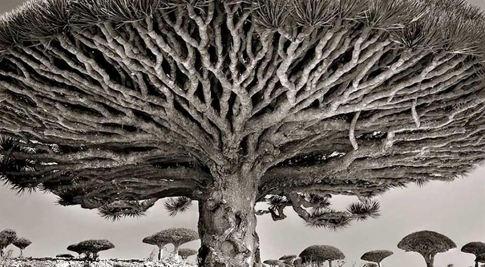 Beth Moon : le monde des vieux arbres