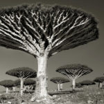 Beth Moon - Ancient trees: portrait of time