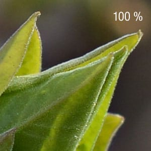 Recadrage 100 % image Nikon D800